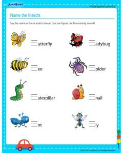 name-the-insects