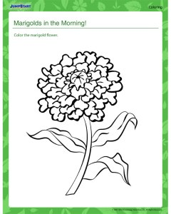 marigolds-in-the-morning